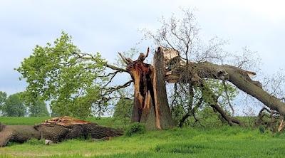 Tipe-tipe kerusakan yang terjadi pada pohon terdiri dari akar patah atau mati, busuk hati, brum, dieback, hilangnya ujung dominan, kanker, malformasi.