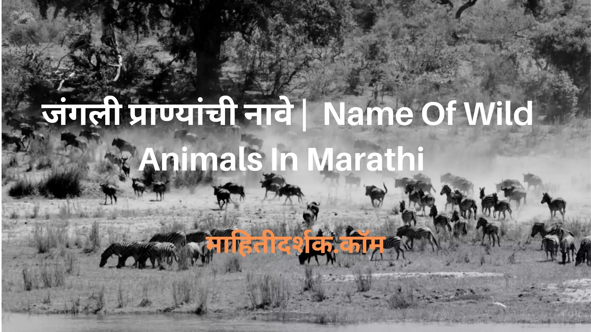 Name Of Wild Animals In Marathi