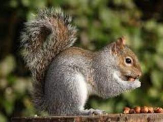 Domestic animals information in marathi