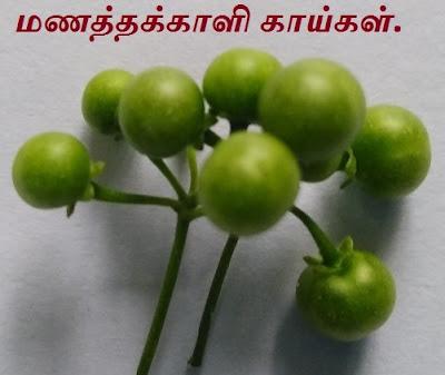 Manathakkali - Black nightshade pods