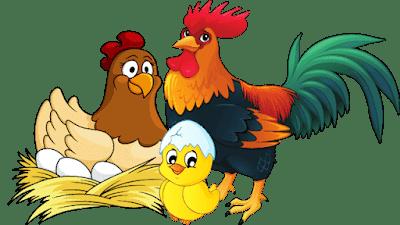 bahasa inggris ayam dewasa