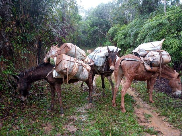 Policia Ambiental flagra extração de Palmito, Maus tratos a animais em Miracatu