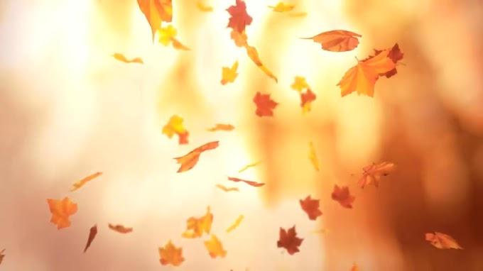 Шепотки на падающие листья: как привлечь удачу в золотую осень