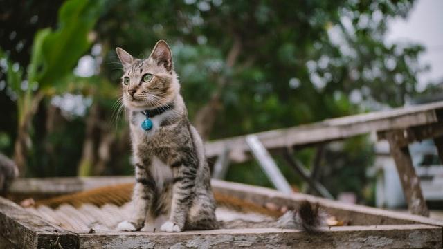 Cara Merawat Kucing Kampung Agar Berbulu Lebat dan Tidak Mudah Rontok