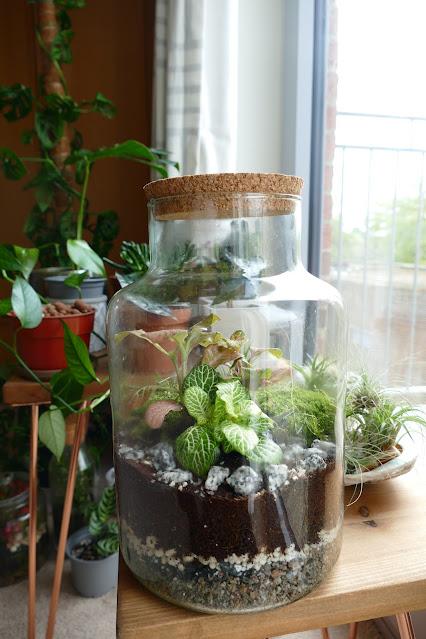 how to make a terrarium uk,terrarium kit gift uk,etsy terrarium review,building your own terrarium,how to build a closed terrarium,terrarium kits etsy,