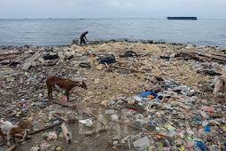 Zainal Arifin Sebut Kandungan Parasetamol di Teluk Jakarta Ditemukan Sebelum Covid-19