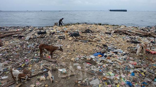 Zainal Arifin Sebut Kandungan Parasetamol di Teluk Jakarta Ditemukan Sebelum Covid-19.lelemuku.com.jpg