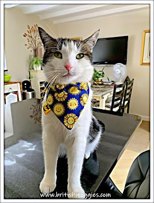 Cute tabby cat wearing a sunshine bandana