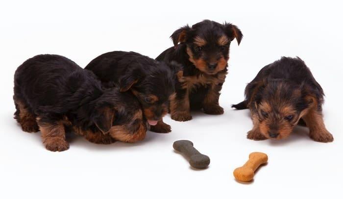 Changing dog food: How to change dog food