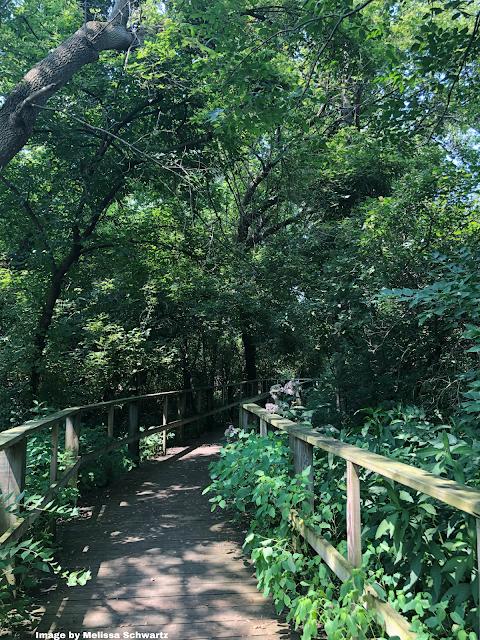Boardwalk leading through noted bird haven Magee Marsh.