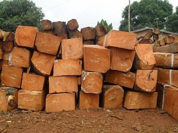Đặc điểm hình thái cây gỗ gụ