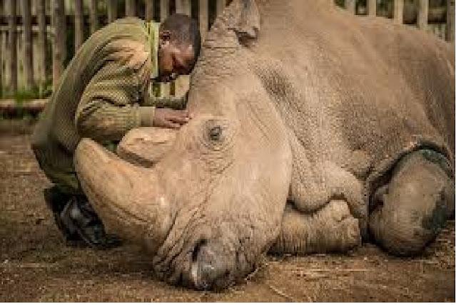 It's Official: Last Male Sumatran Rhino Is Dead