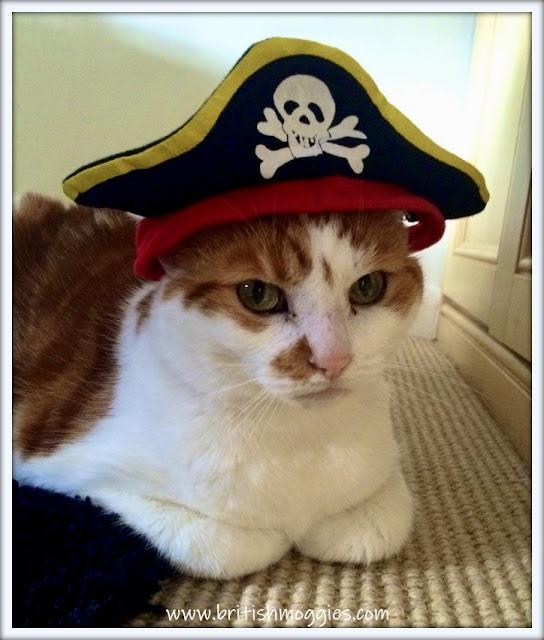 Ginger tabby in pirate hat, cute cat in pirate hat, the cat in a hat,