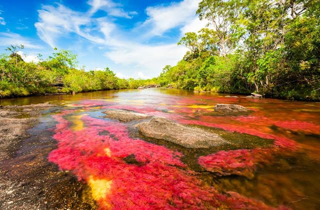 Caño Cristales, uno de los destinos no tradicionales más buscados en Colombia