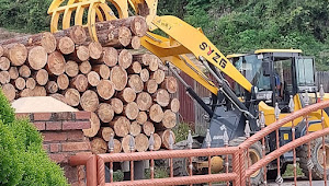 Marak Penebangan Pohon dan Dimuat ke Truk, Ini Kata UPT Kehutanan Samosir