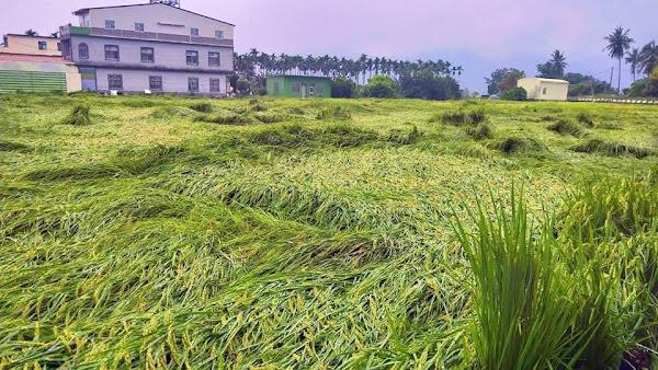 圓規颱風將影響台灣 農糧署籲請農友加強防範措施