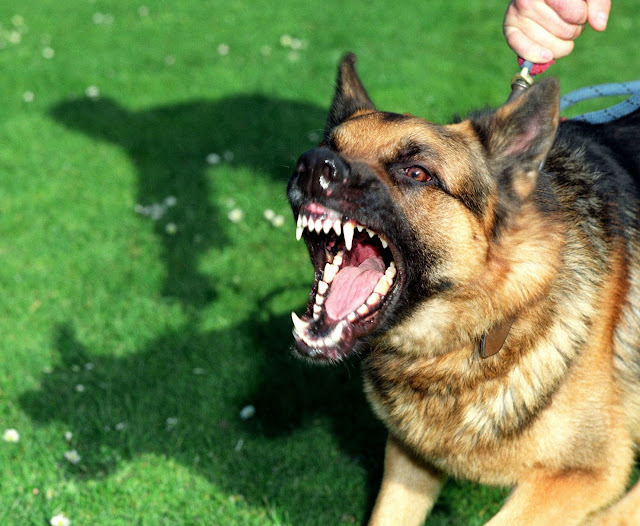 How To Stop Dogs From Barking At Neighbors: 6 Ways You Should Try