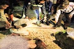 Pembunuhan Sadis di Samosir Anak Potong Kepala Ayahnya
