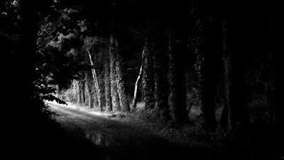 jalan hutan yang gelap