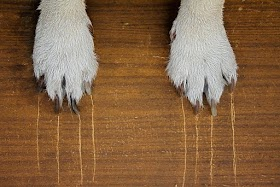 Why Do Dogs Scratch The Floor?