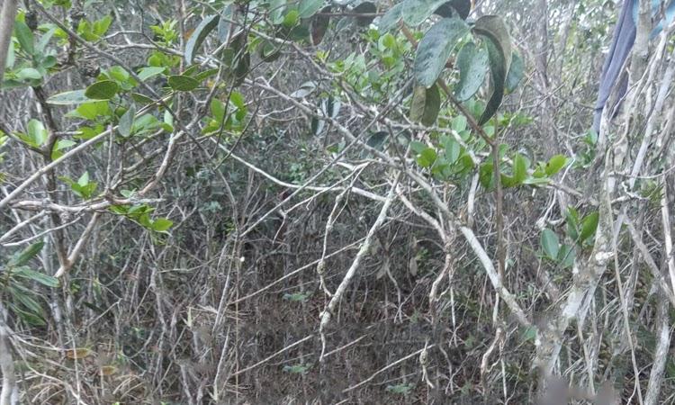 Corpo em estado avançado de decomposição é encontrado na zona rural de Piatã
