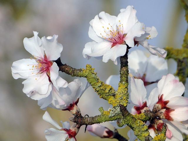 badam tree flower