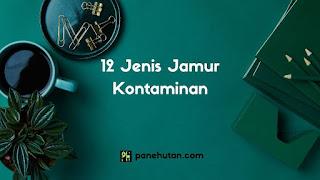 12 Jenis Jamur Kontaminan