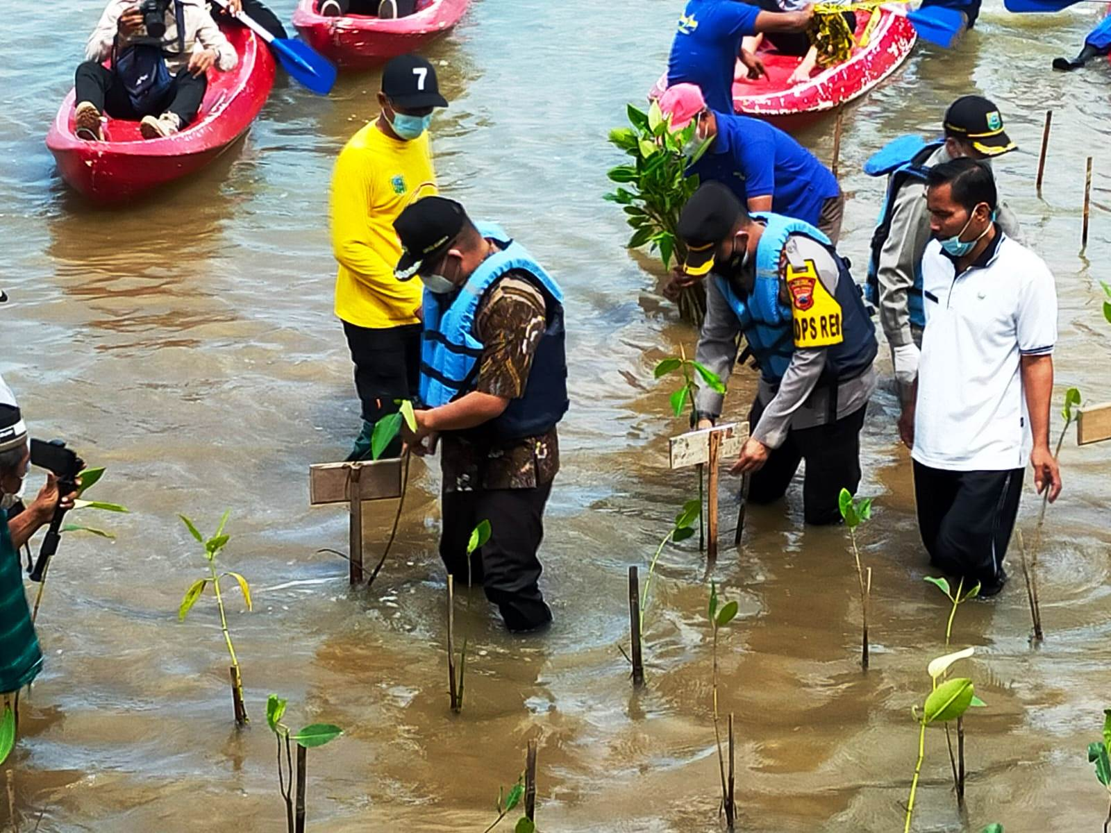 Mageri Segoro, 50 Ribu Bibit Mangrove Ditanam di Pantai Ayah