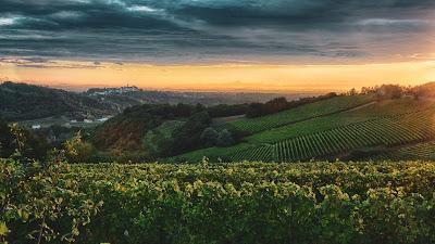 gavi territorio areale vino