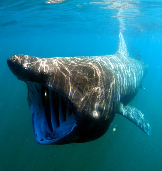 13 Scary but harmless animals