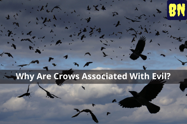 Why Are Crows Associated With Evil?