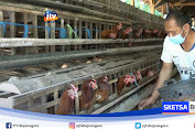 Ternak Ayam Petelur Program Asimilasi Lapas Tuban Eksis Di Tengah Pandemi