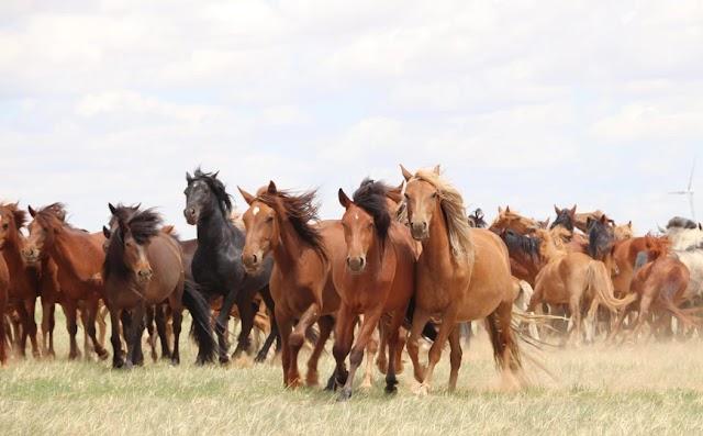 Λύθηκε το «μυστήριο»: Βρέθηκε πού και πότε εξημερώθηκαν τα άλογα – Πώς έγιναν πιο υπάκουα στους ανθρώπους