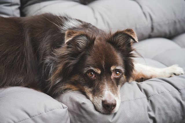 UK Insurers Are Now Covering Cost of Therapy For Distressed Dogs