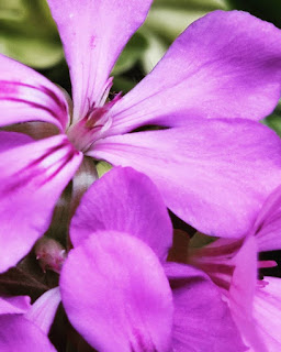 Pale Purple Aesthetic