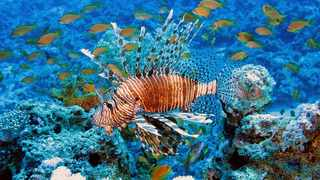 Lionfish Spotted in the UK Waters for the First Time