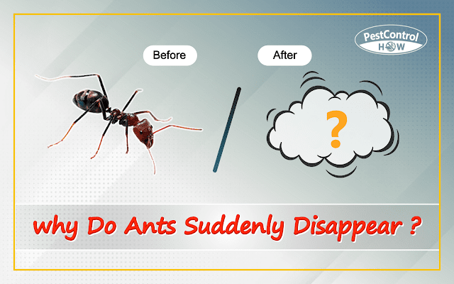 why-do-ants-suddenly-disappear