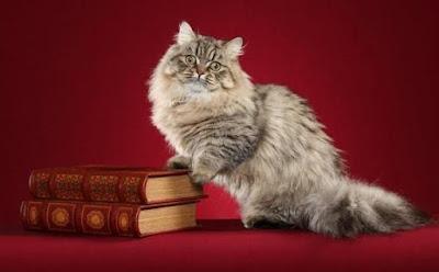 Karakter Ras Kucing Minuet