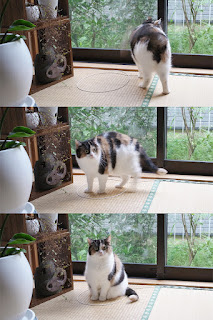 Por qué tantos gatos se sienten irresistiblemente atraídos por los círculos