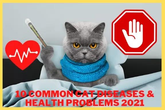 Look 10 COMMON CAT DISEASES & HEALTH PROBLEMS 2021