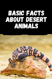 facts about desert animals