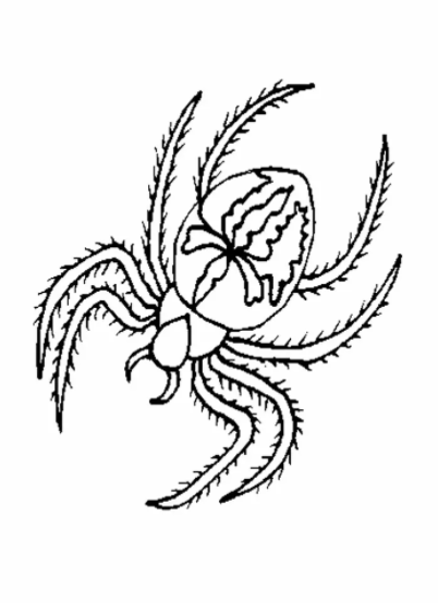Spider Coloring Pages To Print 2