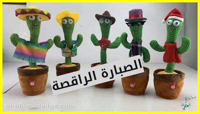 ما هي الصبارة الراقصة و كيف تصدرت التريند في مصر ؟!
