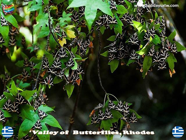Valley of Butterflies, Rhodes