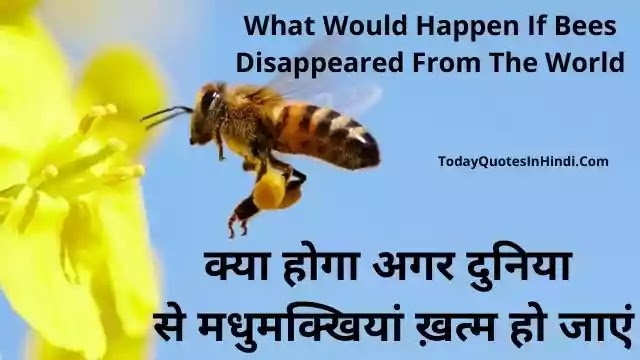What-Would-Happen-If-Bees-Disappeared-From-The-World