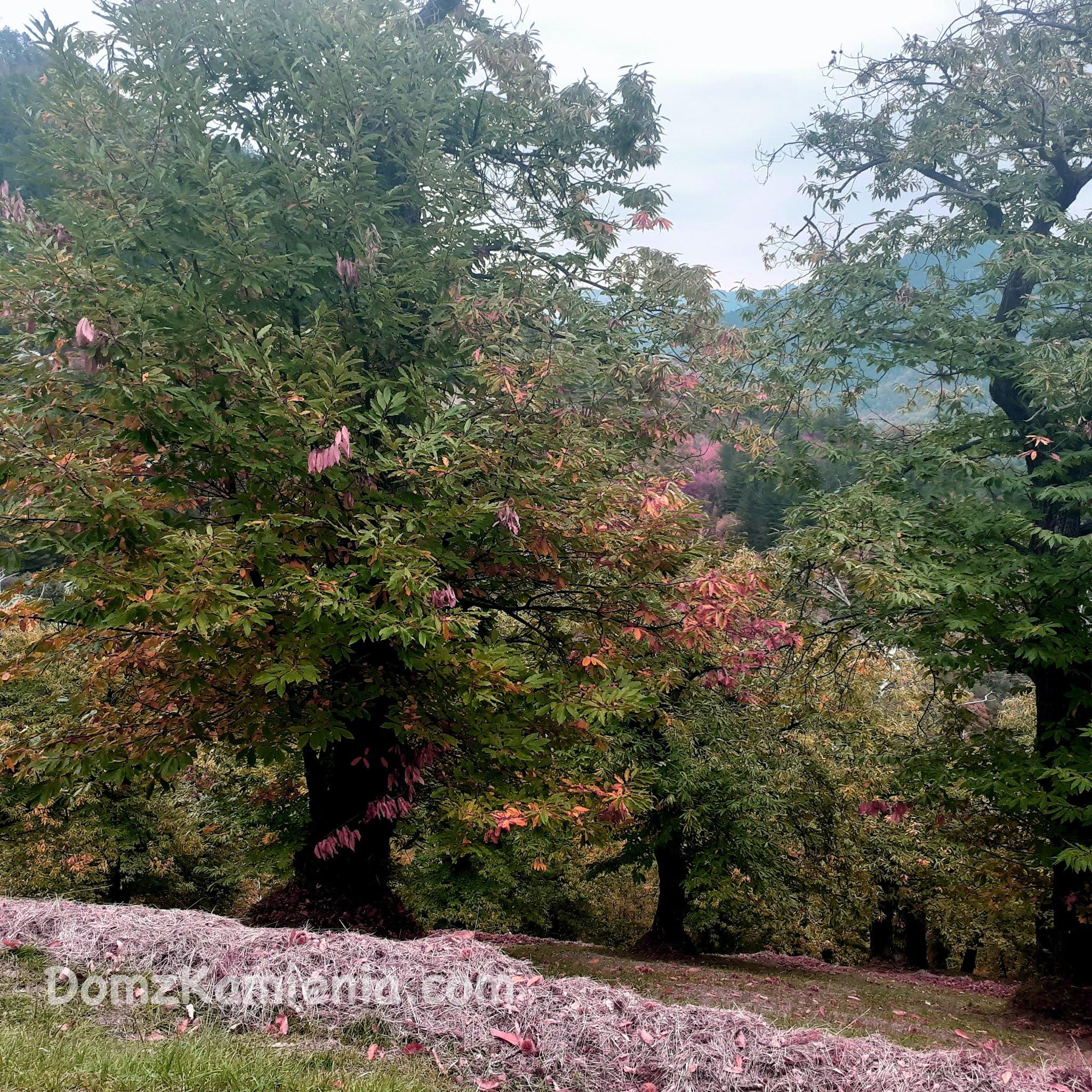 Dom z Kamienia blog, gaje kasztanowe Toskania