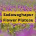 Sadawaghapur Flower Plateau   District Satara