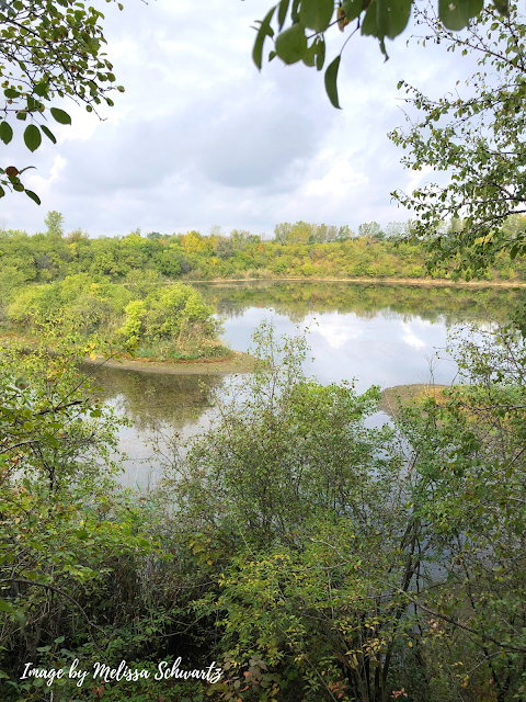 Lovely fall warmth highlighting one of the lakes at Lake Renwick Preserve.