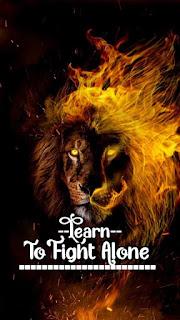 hd lion motivational wallpaper