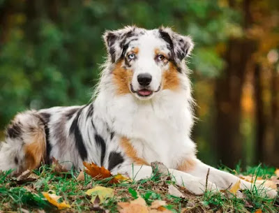 look 10 smartest dog breeds more attention to dog 3 and 1